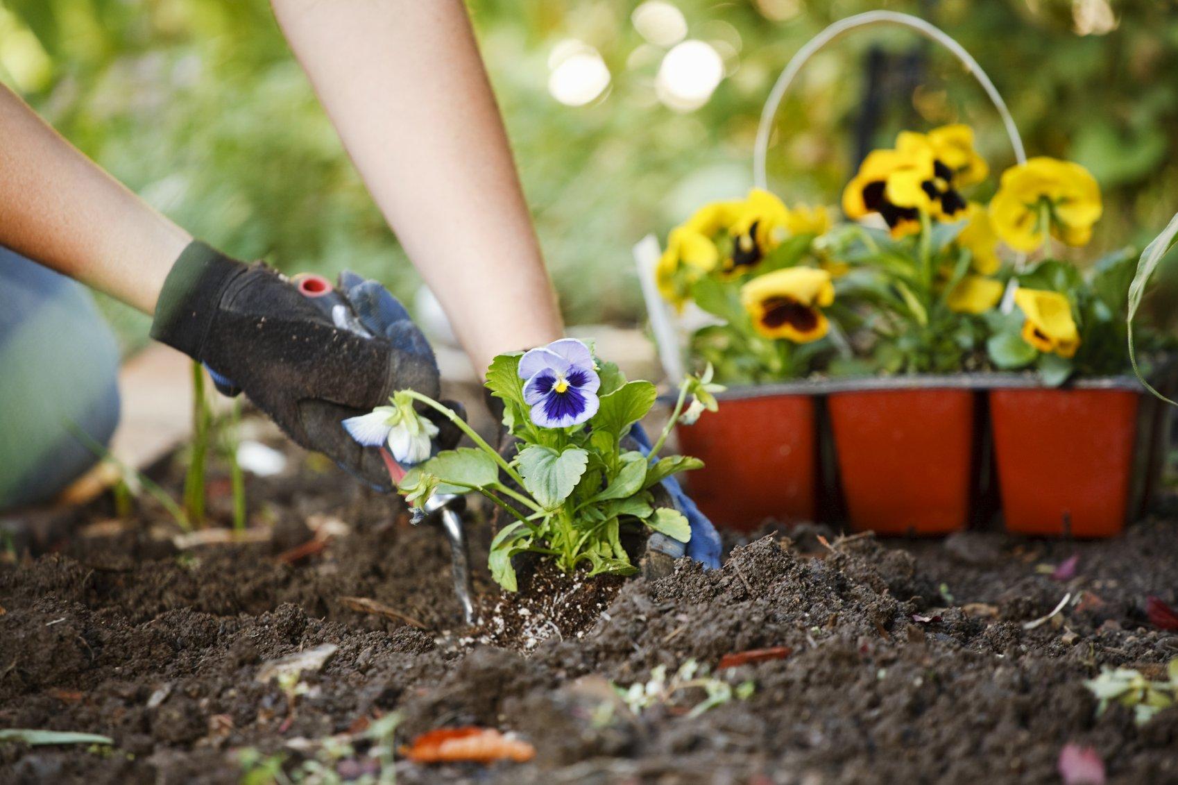 Blumen_Bepflanzung