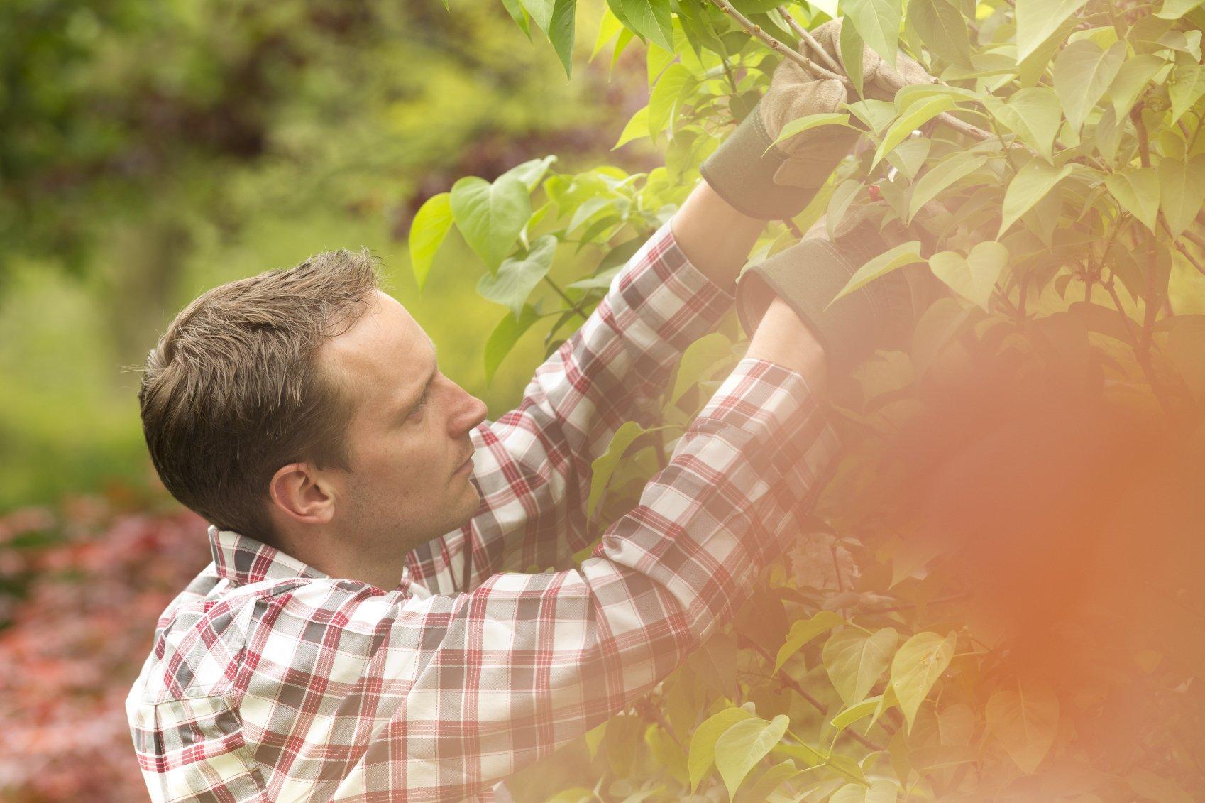 Landwirt_Pflanze schneiden